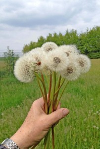 Blumen für die Damen vom Ahrensburg Magazin